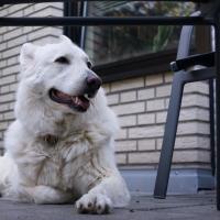 Dogs_April-4