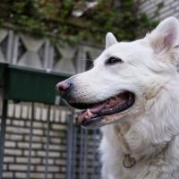 Dogs_April-5