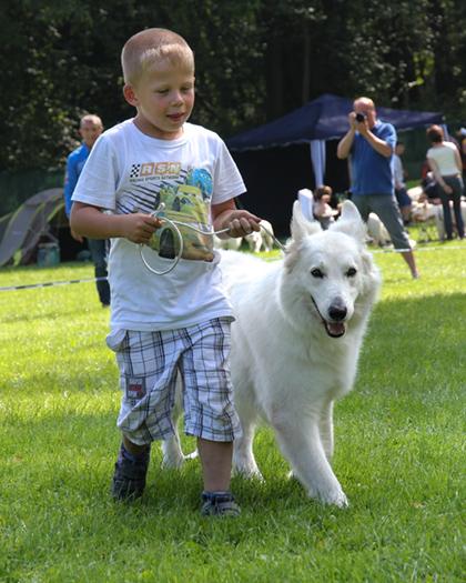 Weiße Schweizer Schäferhunde sind die perfekten Freunde